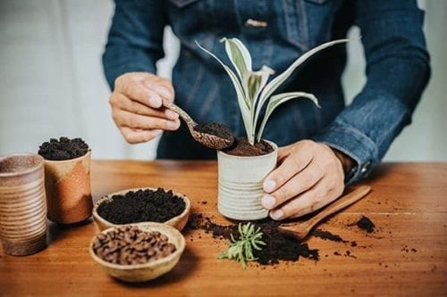 a person is spooning coffee grounds into potted plant