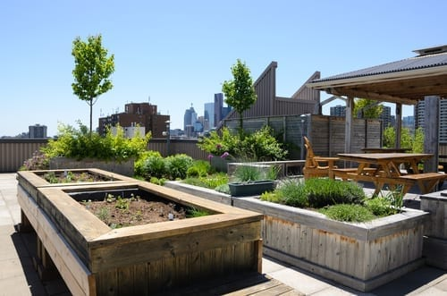raised garden beds on a rooftop terrace with cityscape in the background