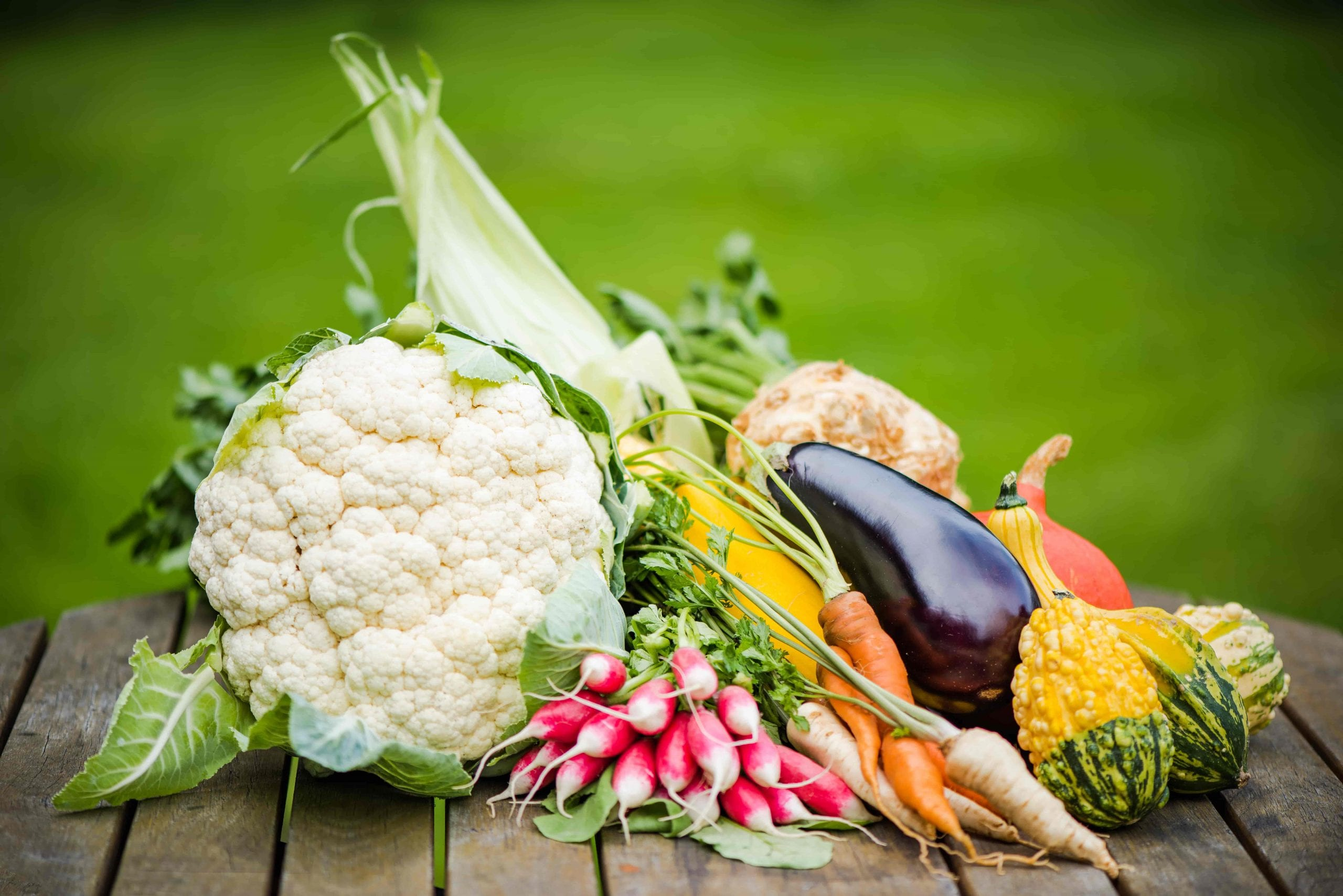 freshly picked vegetables from the fall garden cauliflower radish eggplant squash