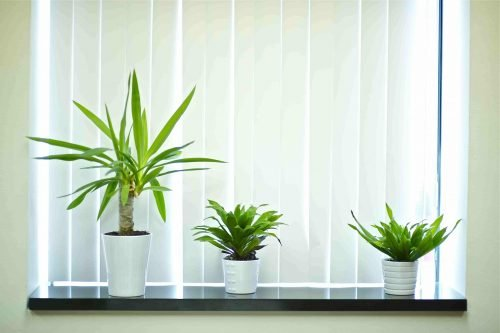 three white pots with plants on windowsill