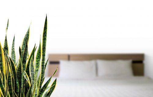 houseplants can help you sleep better