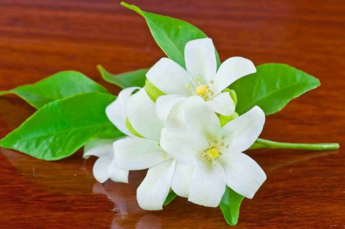 white orange jessamine flowers with green leaves on brown table