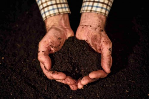 hands holding potting soil in vegetable garden