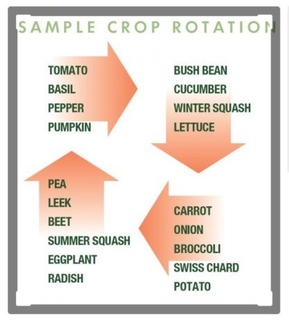 crop rotation for four vegetable beds with red arrows
