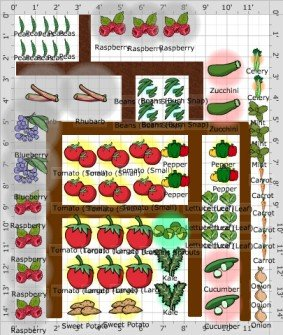 garden plan with measurements and plants