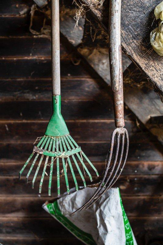 dirty rake and garden fork in the vegetable garden