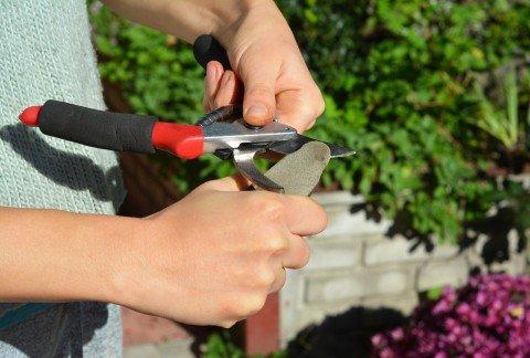 sharpen garden tools for working in vegetable garden