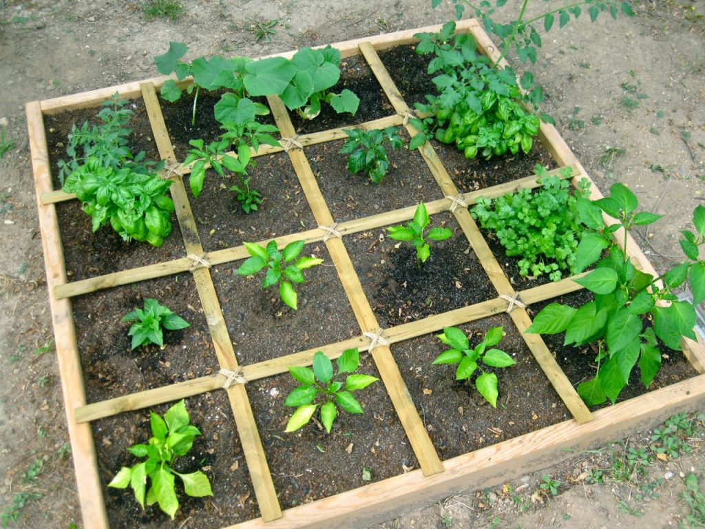 square foot garden example with wood squares filled with plants 4 x 4