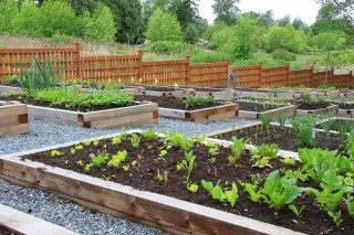 vegetable garden in raised beds with pathways
